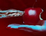 Segretezza in Apple: i dipendenti fanno il punto della situazione