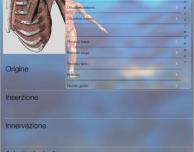FisioApp, la prima app italiana dedicata alla fisioterapia