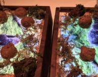 In un ristorante di San Francisco il cibo si serve sugli iPad